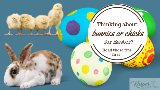 Thinking about bunnies or chicks for Easter? Read these tips first!