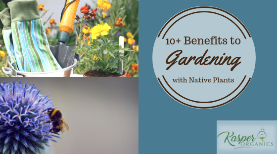 10+ Benefits to Gardening with Native Plants